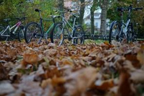 Vélo et feuilles mortes