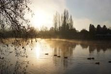 Bonjour les canards