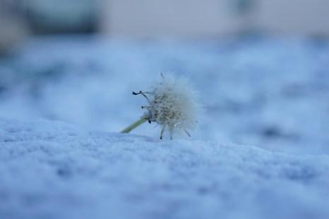 Samedi 16 janvier : dans la neige