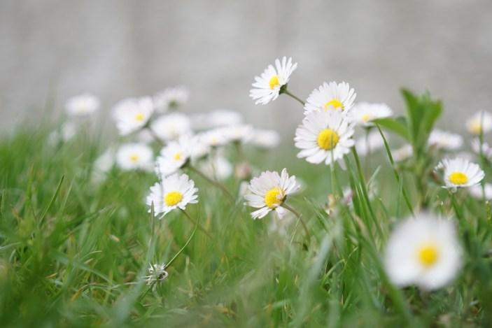 2016-04-20-fleurs