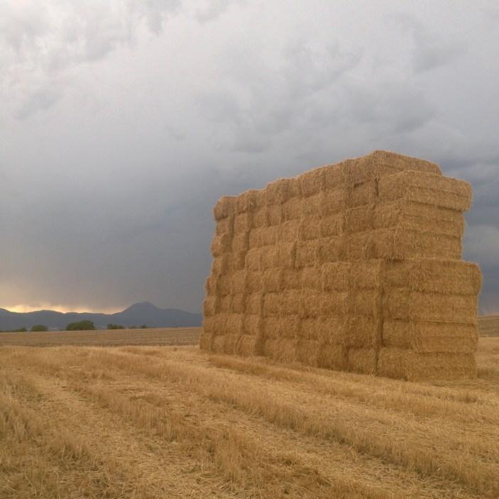 Balade avant l'arrivée de l'orage