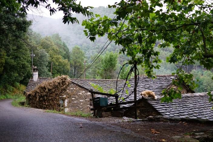 2016-08-20-chien-toit-lozere-cousinade