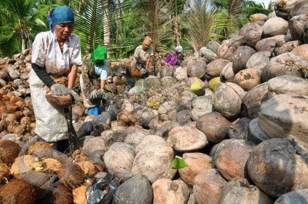 Berikut Harga Komoditi Perkebunan di Riau Pekan Ini