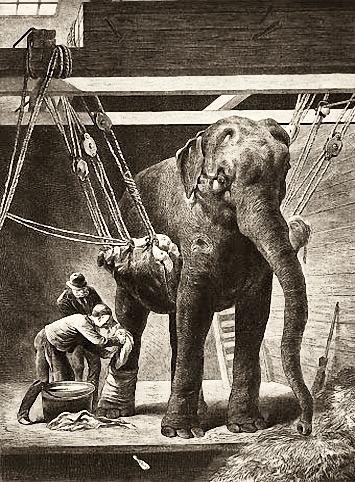 sw-Abb.: Elefant hängt in einer Aufhängung