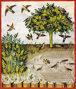 farbige Buchmalerei: im Gebüsch hockender Mann, die Leinen eines Schlagnetzes in den Händen