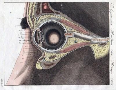 alte Lithografie: Aufbau des Auges