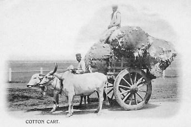 Ochsenkarren, Baumwolle, Indien, Transport