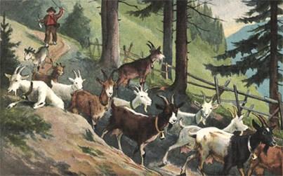 Ziegenhirte treibt Ziegenherde auf Waldweg ins Tal