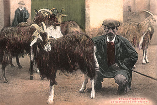 Ziegenhirten, Wollhaarziegen, Pyrenäen