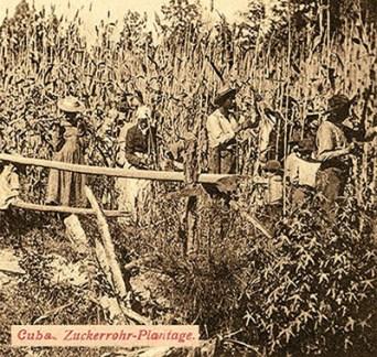 Zuckerhersteller, Zuckerrohrernte, Landwirtschaft, Cuba