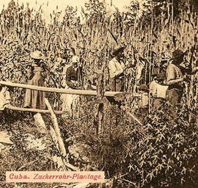 altes sw-Foto: Männer, Frauen und auf einer cubanischen Zuckerrohr-Plantage bei der Arbeit