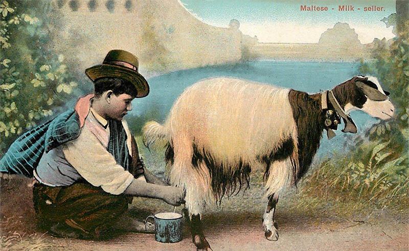 kolorierte Postkarte: junger Mann mit Hut melkt eine hübsche Ziege