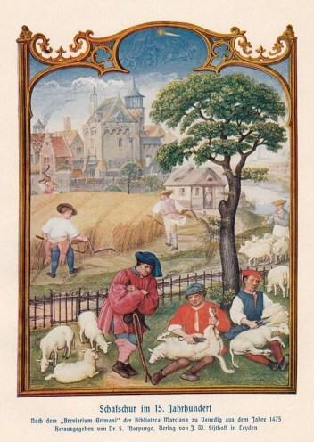 Farbdruck: bukolische Szene mit Getreideernte und Schafschur