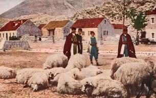 vier Schäfer am Dorfrand mit wolligen Schafen