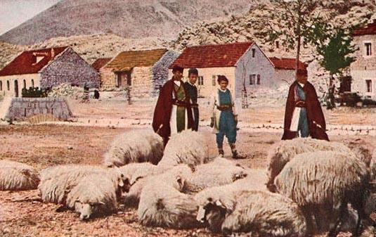 Montenegro, Schäfer, Schafe