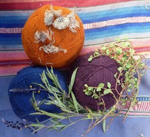 gefärbte Wolle mit zugehörigen Färberpflanzen