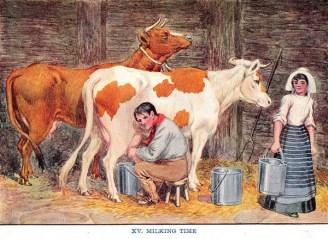 Zwei Kühe stehen im Stall. Der Mann sitzt auf einem Melkschemel und melkt. Die Frau bringt einen Milcheimer weg.