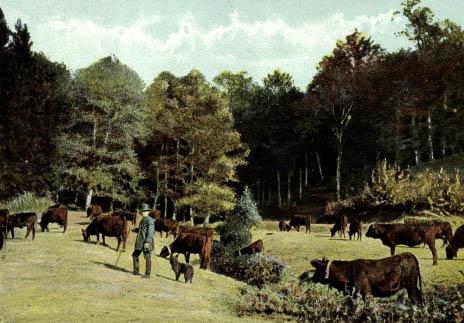 Kuhhirte mit Kühen auf einer Waldwiese