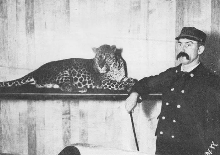 Tierwärter mit Leopard