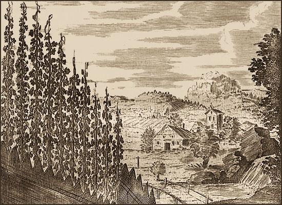 Kupferstich: Hügel mit Hopfenpflanzen und weiter Blick in die Landschaft - 1695
