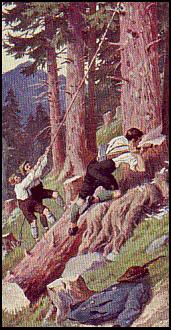 Sammelbild: drei Männer fällen einen Nadelbaum im Wald