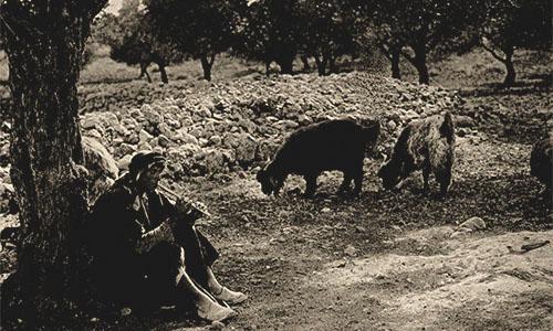 sw Fotopostkarte: Flöte spielender Ziegenhirte - 1890, Palästina