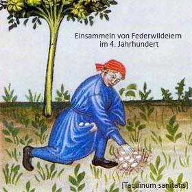 Buchmalerei: Einsammeln von Federwildeiern im 4. Jh