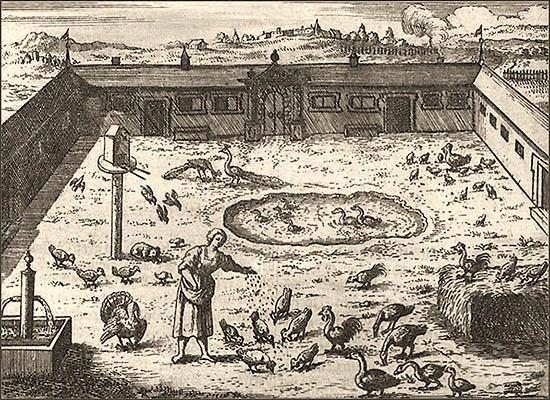 Kupferstich: Bauernhof mit diversem Geflügel - 1695
