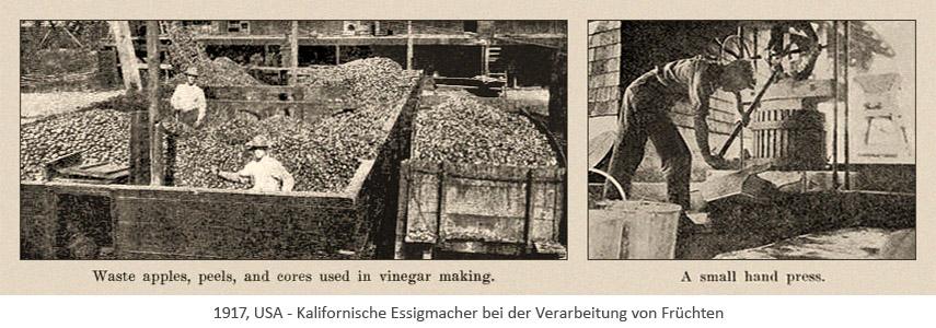 sw Zeitungsabb.: Kalifornische Essigmacher verarbeiten Früchte - 1917, USA