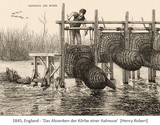 Zeichnung: Mann senkt mittel Windenvorrichtung Aalkörbe ins Wassser - 1875, GB