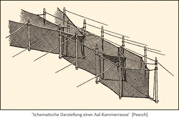 Schematische Darstellung einer Aal-Kammerreuse