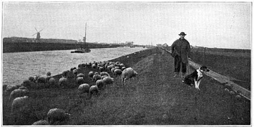 sw-Foto: Schäfer mit Schafen auf einem Damm entlang eines Kanals
