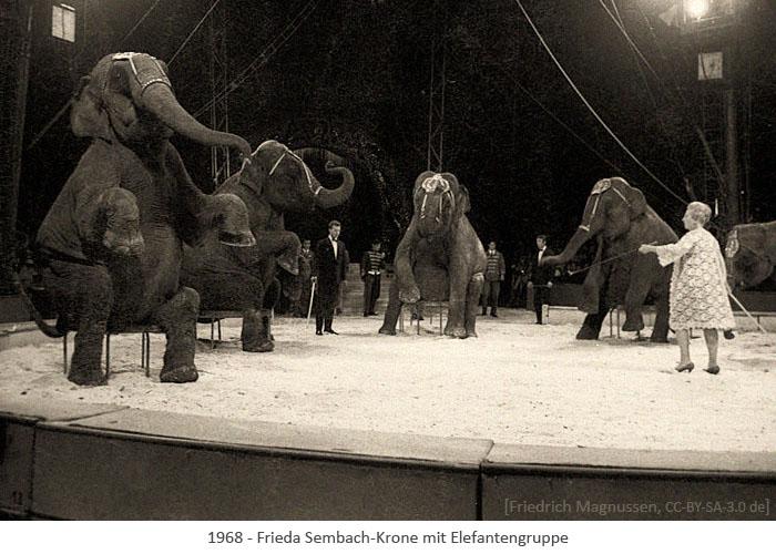 sw Foto: Frieda Sembach-Krone mit Elefantengruppe - 1968