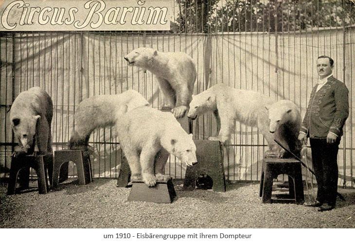 sw Fotopostkarte: Eisbärengruppe mit ihrem Dompteur ~1910