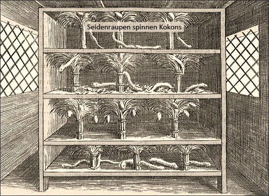 Kupferstich: Seidenraupen spinnen Kokons - 1695