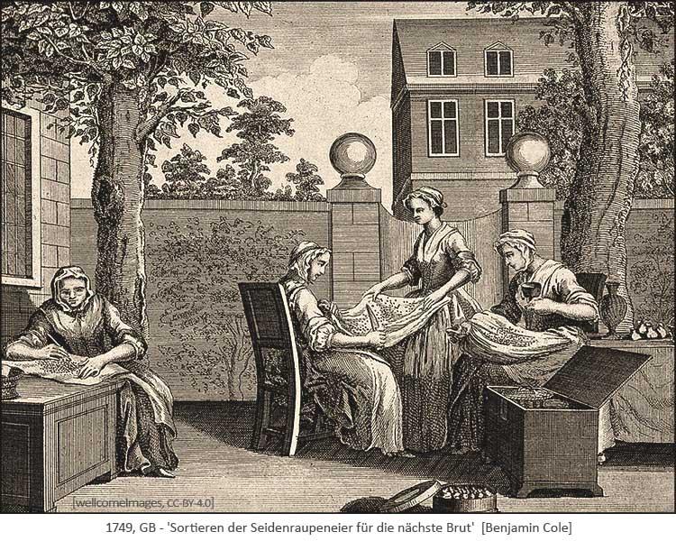Kupferstich: Sortieren der Seidenraupeneier für die nächste Brut - 1749, GB
