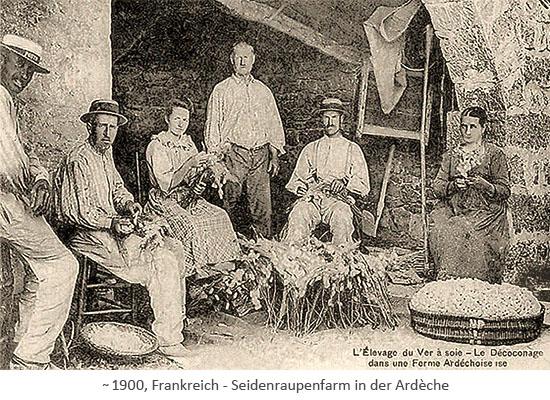sw Fotopostkarte: Arbeiter einer Seidenraupenfarm ~1900, FR
