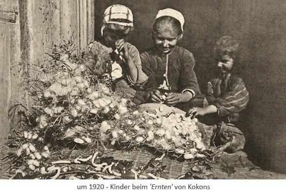 sw Fotopostkarte: 3 Kinder sammeln Kokons ein ~1920
