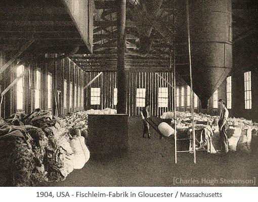 sw Foto: Beschäftigte in der Halle einer Fischleimfabrik - 1904, USA