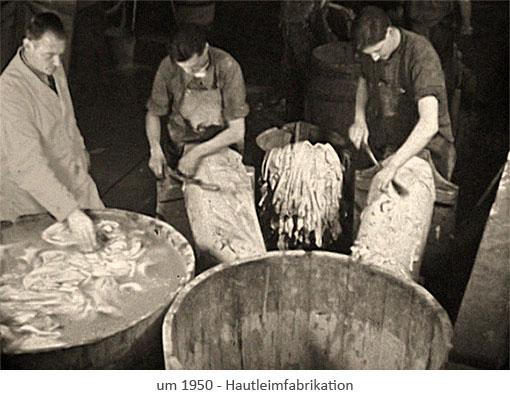 sw Foto: Männer beim Abschaben von Tierhäuten ~1950