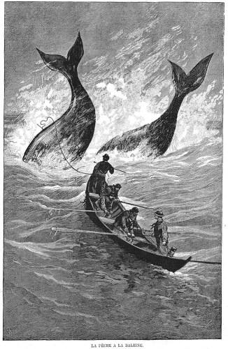 sw: vier Fischer jagen zwei Wale auf See