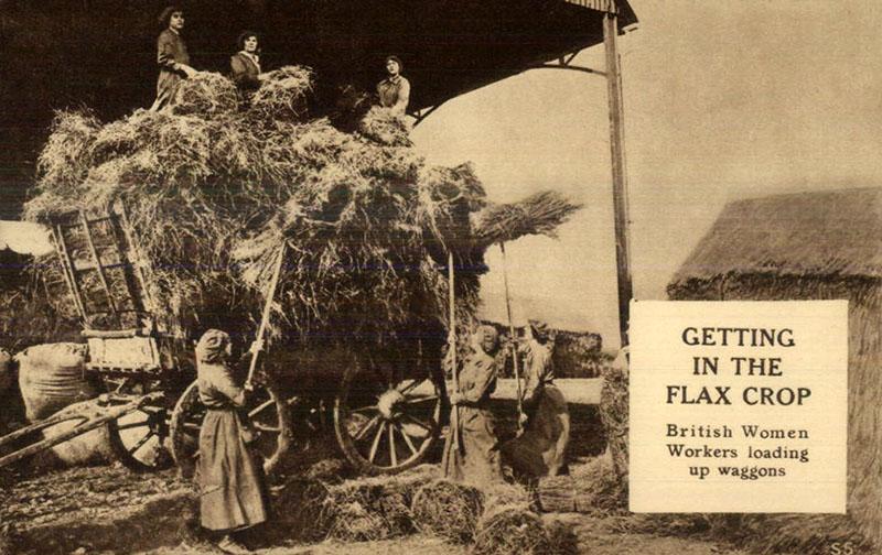 Frauen laden Flachsbündel auf Leiterwagen