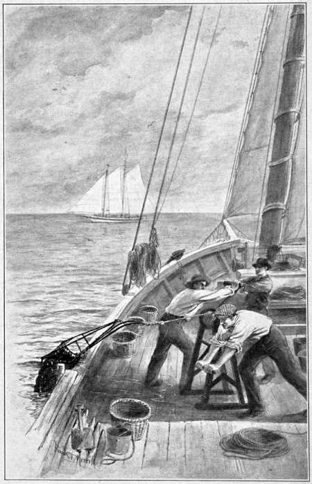 Zeichnung: Austernfischer auf dem Meer