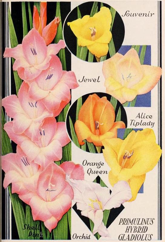 alter Gartenkatalog mit Blumen