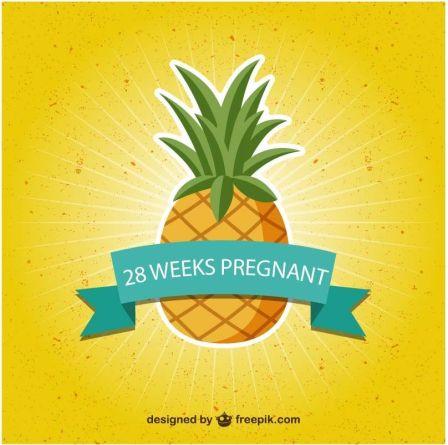 28 weeks pregnancy size