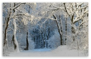 into_the_forest_winter-t2
