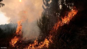 Vegetation burns during a forest fire in Arbo in the northwest Spanish region of Galicia, August 11, 2016. REUTERS/Miguel Vidal