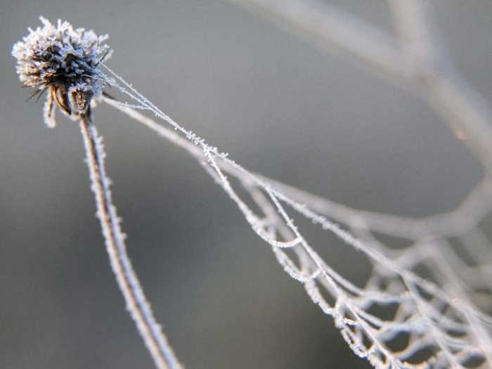 صور حول العالم: شبكة عنكبوت متجمدة بفعل الصقيع في هنغاريا..