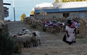 Isla del Sol, Bolivia – August 22, 2013: A woman walks up next to a sheep herd dressed in a traditional outfit.