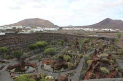 Jardin de Cactus 02